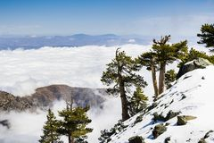 Evergreen trees high on the mountain; sea of white clouds in the background covering the valley, Mount San Antonio (Mt Baldy), Los. Angeles county, California royalty free stock photos