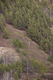 Evergreen trees on the hilly Bank stock image
