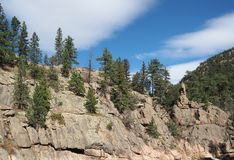 Evergreen trees on a mountain royalty free stock photography