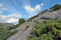 Evergreen trees and shrubs on a steep rocky hillside in Crimea Stock Photos
