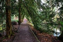 Evergreen trees Stock Photos