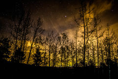 Evergreen Winter Night. Starry Night in Evergreen Colorado with the bare trees in the cold of Winter Stock Photo