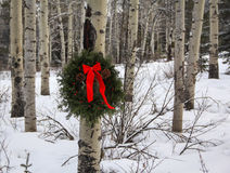 Evergreen Wreath. Holiday wreath on aspen tree in the forest Stock Photo