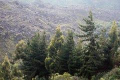 Evergreens εκτός από μια λίμνη στοκ φωτογραφίες με δικαίωμα ελεύθερης χρήσης