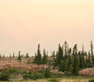 Evergreens в розовом граните стоковая фотография