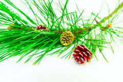 Evergreens Royalty Free Stock Photos