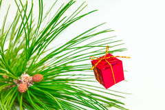 Evergreens Royalty Free Stock Images