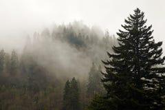 Evergreens, autunno, grandi montagne fumose Immagine Stock