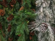 Evergreens do Natal naturais e branco reunido imagens de stock