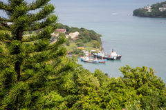 Evergreens on Hill with Freighters in Background Stock Images