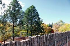 Evergreens i kolorów żółtych drzewa Zdjęcia Royalty Free