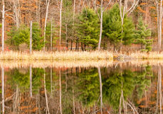 Evergreens, leaf drop trees, reeds and reflections on pond and Fall color. Upstate rural New York stock images