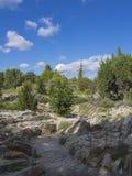 Evergreens mit Felsen in einem Garten stockfoto