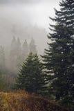Evergreens, outono, grandes montanhas fumarentos Fotos de Stock Royalty Free