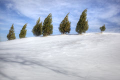 Evergreens on snowy hill Royalty Free Stock Photography