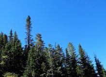 Evergreens in Vreedzame Noordwestenbergen Stock Fotografie