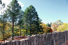 Evergreens and Yellow Trees. Everygreens stand behind a wooden fence while autumn leaves proliferate behind them Royalty Free Stock Photos
