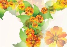 Everlasting flowers background2 Stock Images