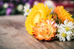 Everlasting flowers and Chamomiles on wood board for background Stock Image