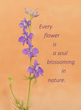 Every flower is a soul blossoming in nature - quote with a Larkspur Stock Image
