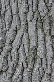Every tree has it`s own skin. Stock Image