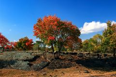 Early autum scenery at Jingpo lake world geological park 5. Every year from mid-September to early October is the optimal period for appreciating autum scene in Stock Images