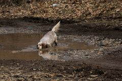 Everyday life - when the dog has fun getting wet in the mud. Space for text Stock Images