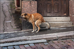 Everyday life of a dog. In a town Royalty Free Stock Image