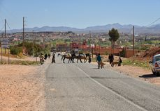 Everyday life in Morocco. Local men crossing the road with their mules in a small town of Morocco, Africa. Everyday life scene Stock Photography