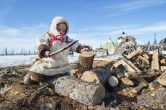 Everyday life of Russian aboriginal reindeer herders in the Arctic. Stock Images