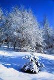 Everyday magic winter. Illustrations, snow royalty free stock photos