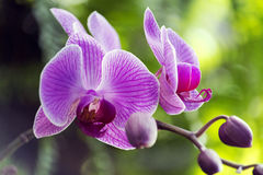 Everyday view. An exotic flower found in everyday life Royalty Free Stock Images
