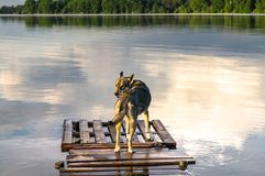 Stray dog is coming up quite close to the water edge. Biserovo lake, Moscow region. Everyone will be fascinated and delighted by vast water spaces of the lake Stock Photo