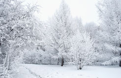 Everything is covered with snow. Fabulous Christmas trees and festive mood.  royalty free stock photos