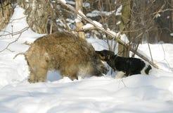Everzwijn en hond. Royalty-vrije Stock Foto