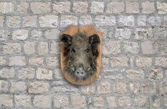 Everzwijnhoofd Royalty-vrije Stock Afbeelding