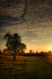 Evevning landscape. Tree and cow on sundown. Autumn landscape. Russia stock photography