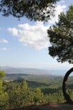 Evia, Grèce Au nord de l'île grecque dans les forêts de pin Photos stock