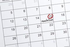 Evidenziatore rosso con il segno di giorno di ovulazione sul calendario fotografia stock libera da diritti