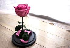 Evig rosa färgros i en flaska royaltyfri fotografi