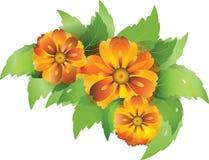 eviga blommor Arkivbilder
