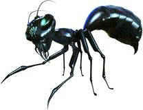 Evil Ant, Insect, Bug, Isolated Royalty Free Stock Images