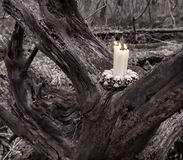 Evil candles on the tree in the forest Royalty Free Stock Photo