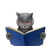 Evil cat in glasses is reading a book. Evil cat in red glasses is reading a book royalty free stock image