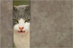 Evil cat Royalty Free Stock Photos