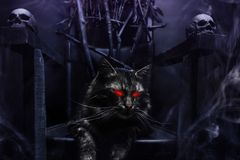 Free Evil Cat On Witch Throne Made Of Branches Royalty Free Stock Photography - 160791657