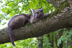 Evil Cat at a Tree. Branch at Blurred Background Royalty Free Stock Photo