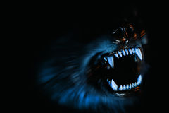 Evil dog. Barking in black background Stock Image
