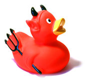 Evil duck Royalty Free Stock Images
