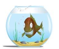 Evil fish in the aquarium. Illustration of evil fish in the aquarium Royalty Free Illustration